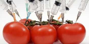 """""""GRASII PAMANTULUI"""" SI """"DEALERII"""" MARILOR TRUSTURI AMERICANE: cine promoveaza culturile OMG (organisme modificate genetic) in Romania si de ce?"""