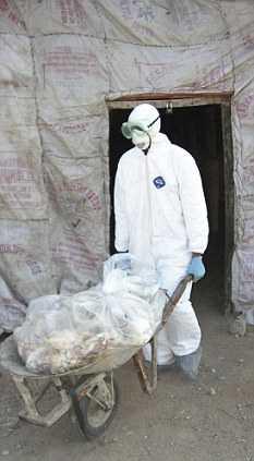 Gripa aviara se intoarce in VARIANTA MODIFICATA GENETIC, ce ar putea avea efecte devastatoare