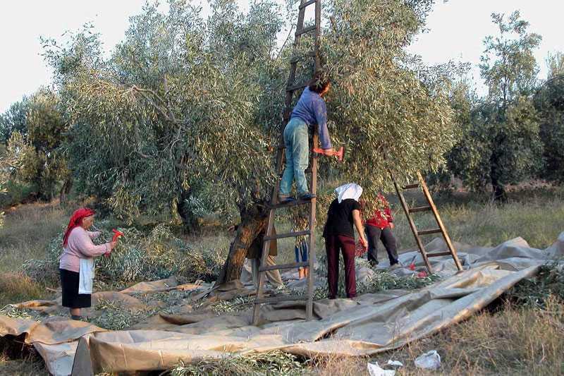 grecia ferma agricola