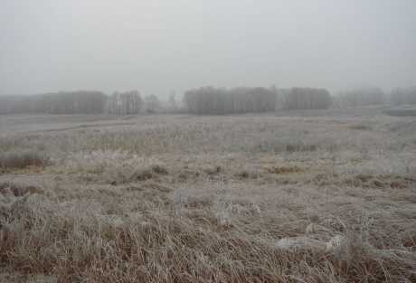 Comisia Europeana va reduce subventiile pentru AGRICULTURA ROMANEASCA