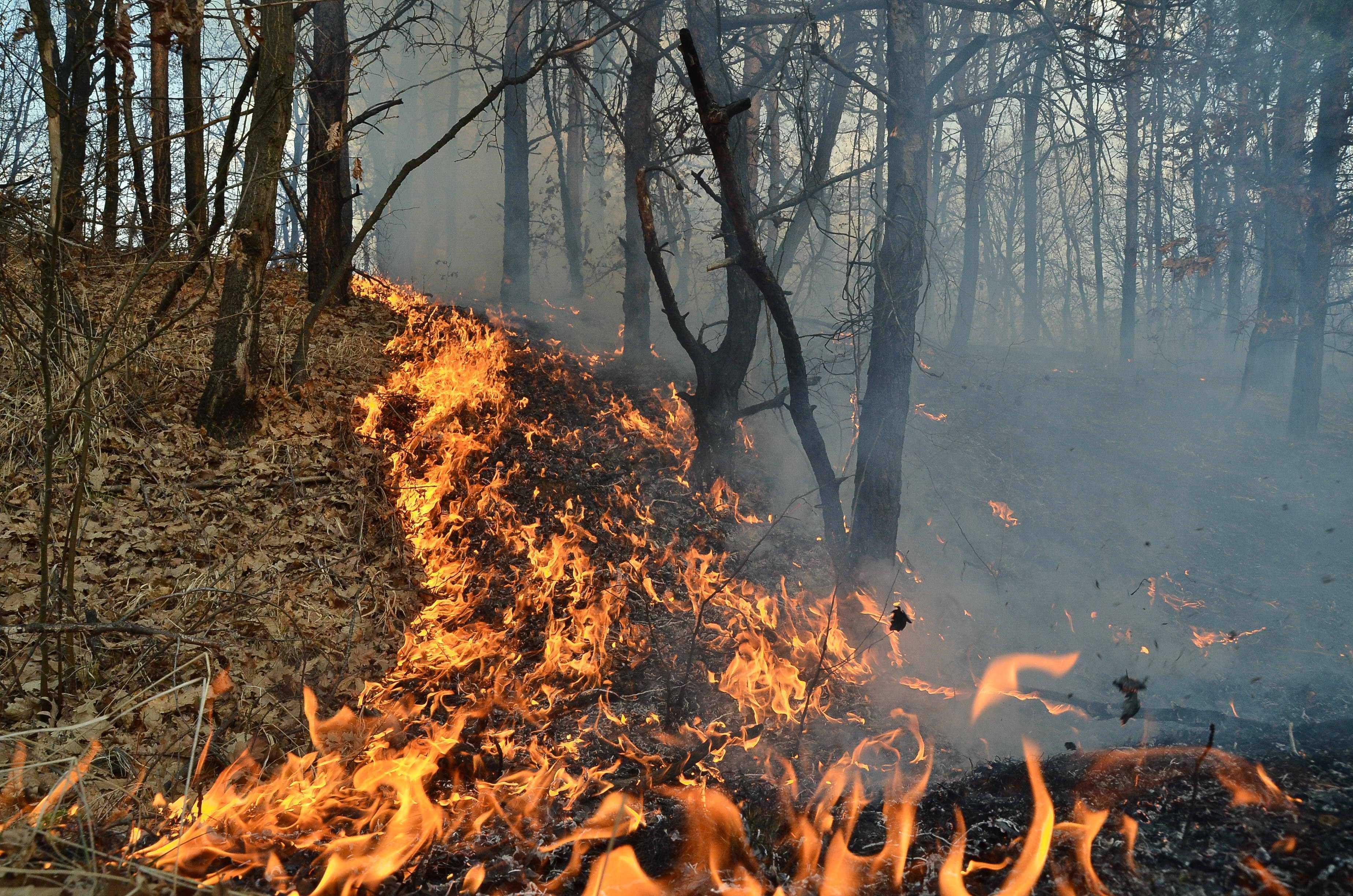 ROMANIA A LUAT FOC: incendii in 35 de judete
