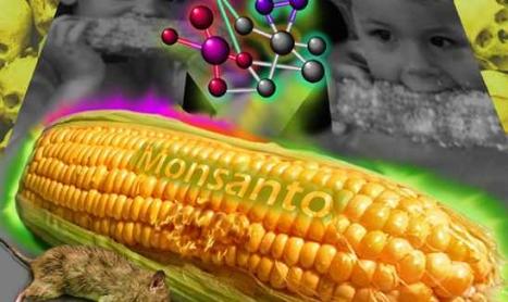 Rusia suspenda importurile de PORUMB MODIFICAT GENETIC. Detalii despre STUDIUL francez asupra efectelor CANCERIGENE ale OMG-urilor