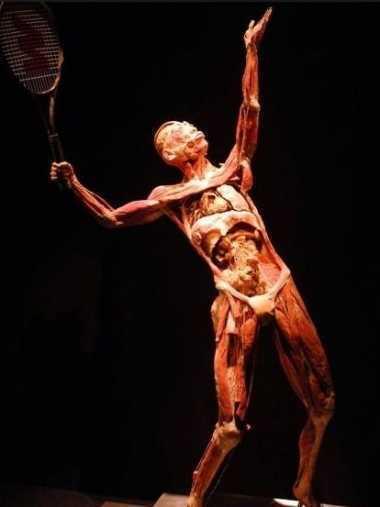 human-body-plastinatie_02349500
