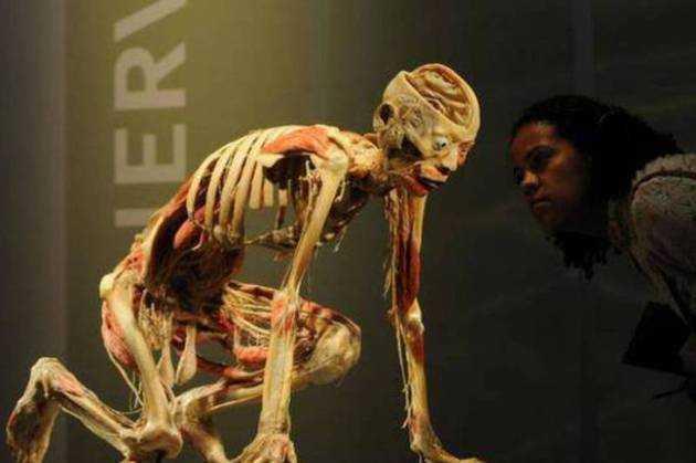 "ANTIPA – INCA UN MUZEU ROMANESC EXPONENTIAL GRAV PERVERTIT DINAUNTRUL SAU: <b><i>""The human body""</i> – expozitie macabra cu trupuri umane</b>. Asociatia PROVITA protesteaza… in zadar"