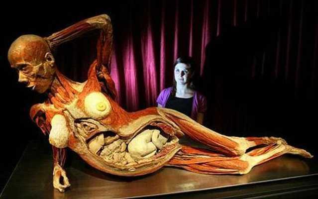 spectacol-macabru-sau-metoda-educativa-controverse-in-jurul-expozitiei-the-human-body-de-la-muzeul-antipa-197986