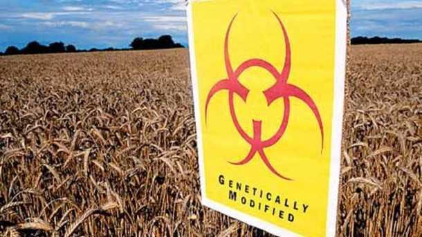 safe-levels-of-monsanto-herbicide-and-gm-crop-linked-to-cancer_strict_xxl