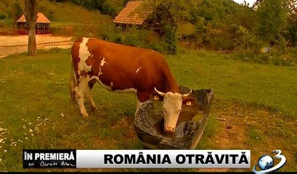 Romania otravita22