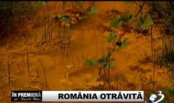 contaminare Plumb Cadmiu zona Baia Mare - Romania otravita2