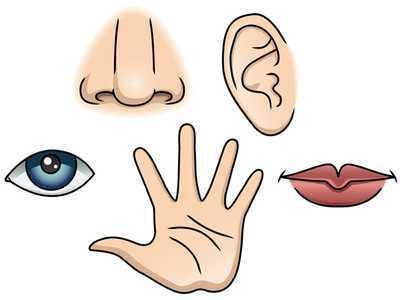 Cele cinci simturi